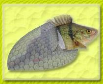 http://vtp.com.ua/files/6/ruba.jpg